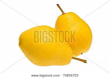 Beautiful ripe yellow pears. Two pears on white background