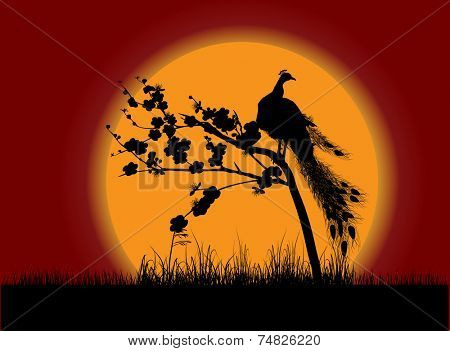 illustration with black peacock silhouette at red sunset