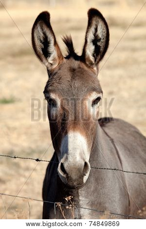 Funny donkey looking at camera behind a fence