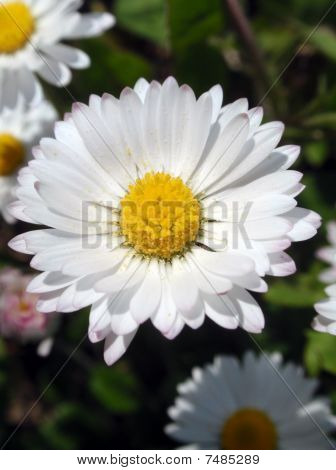 daisy04