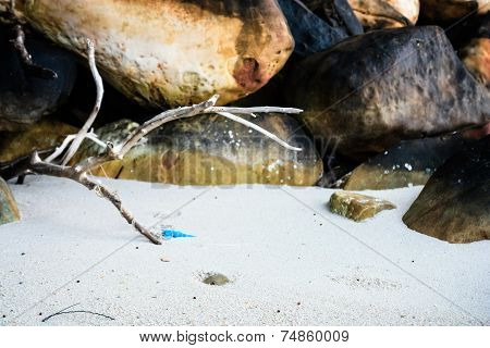 Dry Stick On The Beach