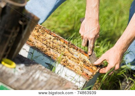 Cropped image of beekeeper removing honeycomb frames from crate at apiary