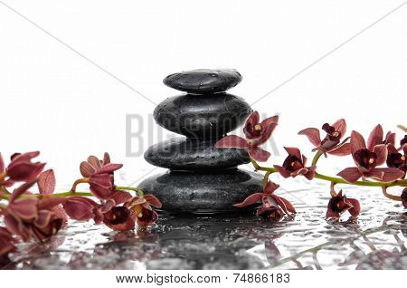 Spa concept �¢�?�?branch stones and red orchid
