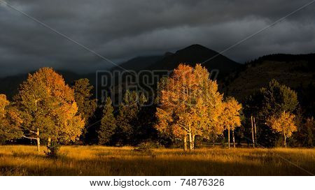 Aspen Tree And Clouds