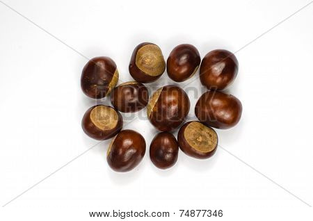 Horse Chestnuts On White