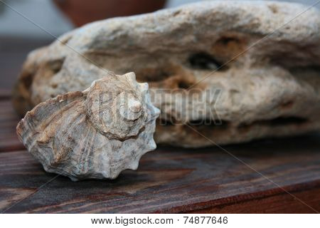 Mollusk Shells