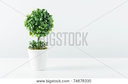 Small Tree In White Pot Isolated