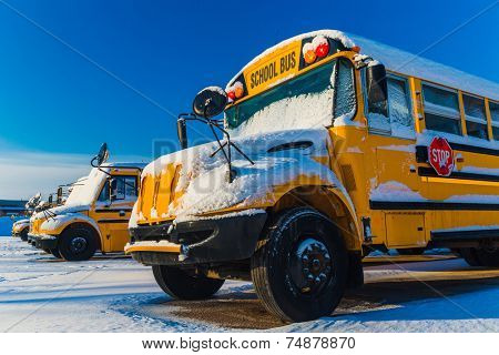 A row of school buses after a snowfall