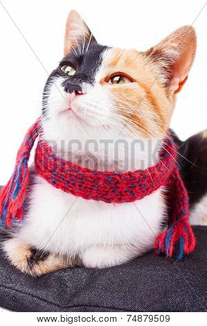 Joyful Calico Cat