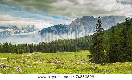 taly Dolomites - a wonderful landscape meadow among pine