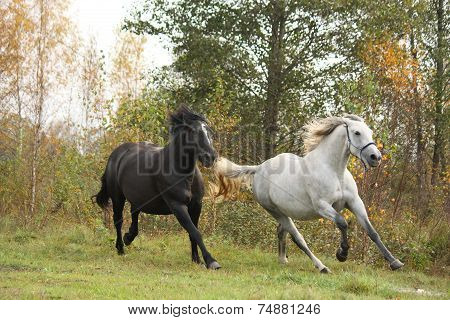 Black And White Horse Galloping