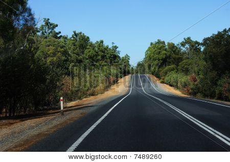 Road Passing Through The Bush