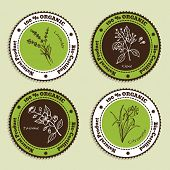 picture of citronella  - Set of Natural Organic Product badges - JPG
