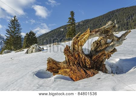 Weathered Tree Roots Stump
