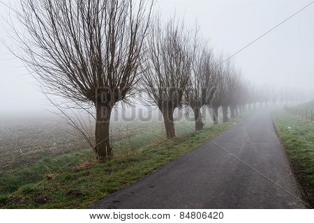 Row Of Leafless Willows Beside A Country Road
