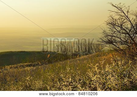 Caucasus Heath