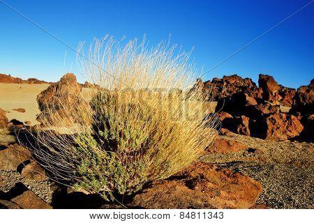 Las Canadas del Teide National Park, Tenerife, Canary Islands, Spain