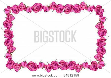 Pink Dray Roses Flowers Blossom Frame