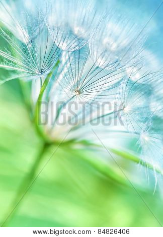 Beautiful dandelion background, abstract floral backdrop, cute fluffy flower, nature detail, dreamy wallpaper, spring season concept