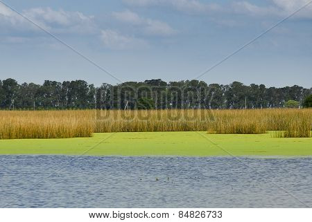 lagoon in the Pampas