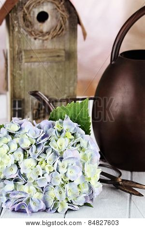 Hydrangea And Gardening Supplies