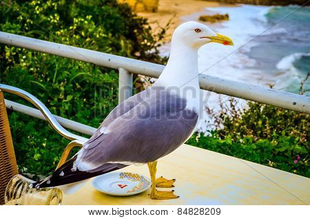 Seagull On Coffee Table