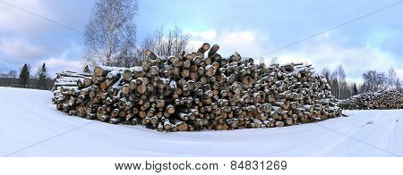 Harvesting Timber Logs In A Forest In Winter