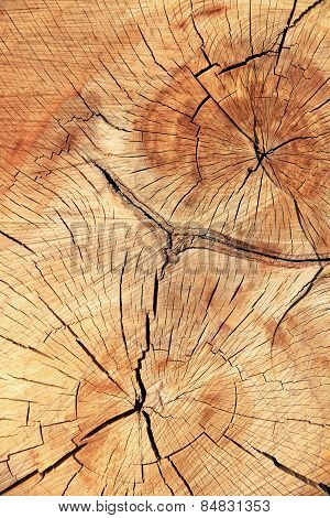 Abstract Background Like Slice Of Wood Timber Natural.