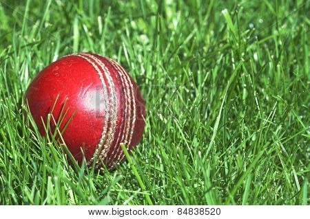 Worn cricket ball lying in long green grass