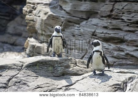 Two penguins standing on some rocks in sunshine