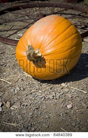 Large pumpkin lying in dirt next to an old rusty wheel
