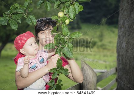 Mother And Daughter Picking Apples