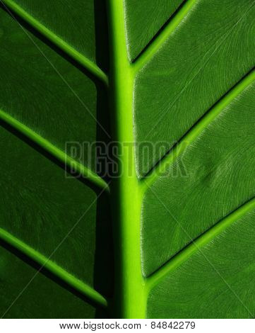 Cropped tropical leaf