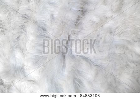 Sheep Wool As Background