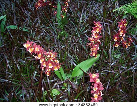 Orchids and leaves