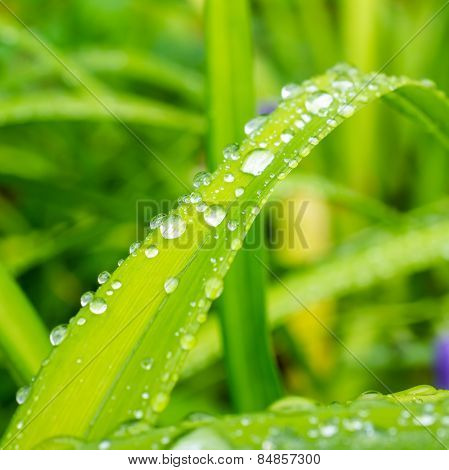 Closeup Of Rain Drops On A Green Leaf In Nature