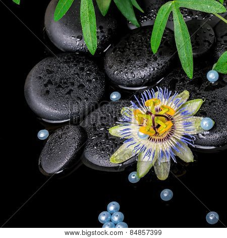Spa Concept Of Passiflora Flower, Green  Branches,  Zen Basalt Stones With Drops And Pearl Beads In