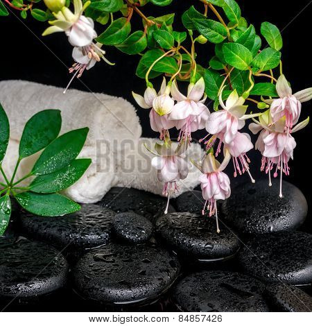 Spa Concept Of Branch Fuchsia Flower, Towels, Leaf Shefler And Zen Basalt Stones With Drops In Water