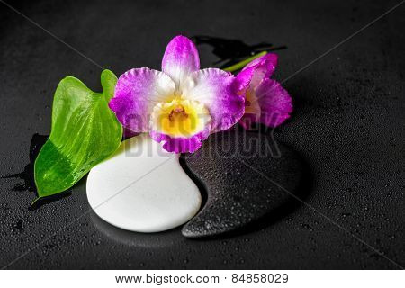 Yin-yang Symbol Of Stone Texture With Green Leaf Calla Lily And Orchid Flower On Dew Black Backgroun