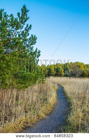 Gravel Path Around Spruce Tree In The Meadow