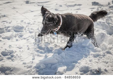 Dog Playing In The Snow In Winter
