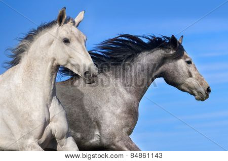 Two horse portrait