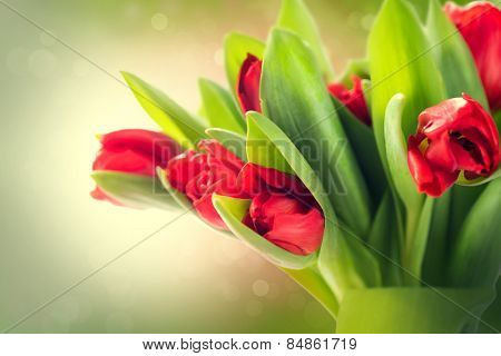 Spring Flowers bunch. Beautiful red Tulips bouquet. Elegant Easter or Mother's Day gift over blurred green nature background. Springtime