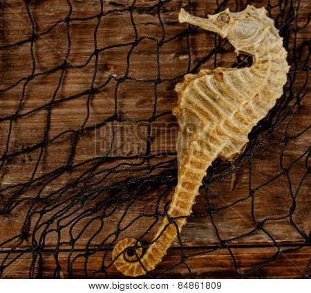 Seahorse in a shipping net