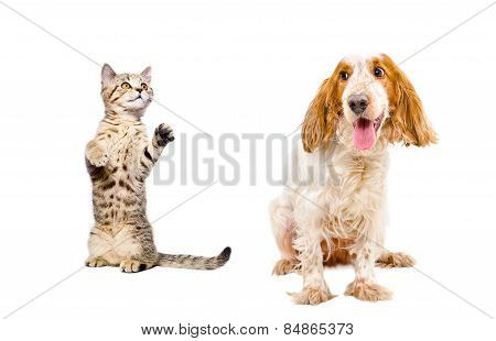 Playful kitten and dog