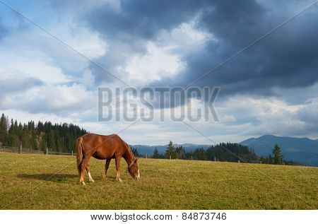 Autumn landscape with a horse in the pasture. Sunny day in the mountains