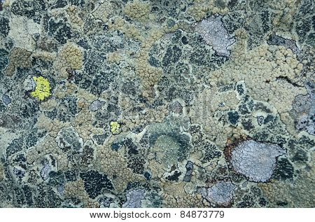 Stone covered with lichen. Natural texture