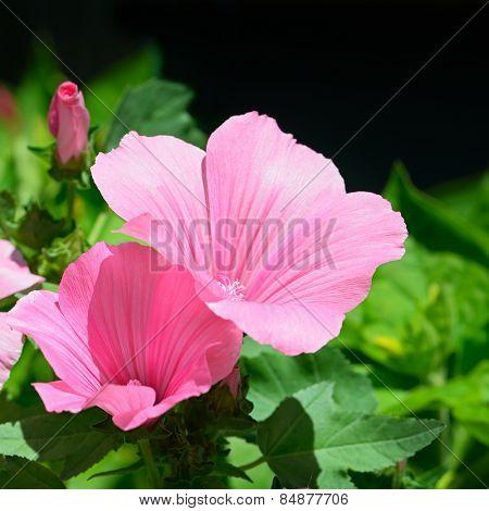Beautiful pink flower in flowerbed