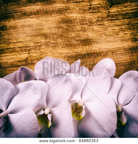 flower phalaenopsis on wood background for advertising