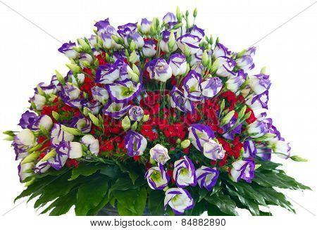 Big Wonderful Flowers Bouquet Isolated On White